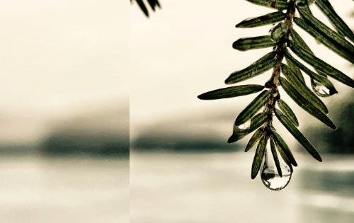 Gota deslizándose por una rama de una planta