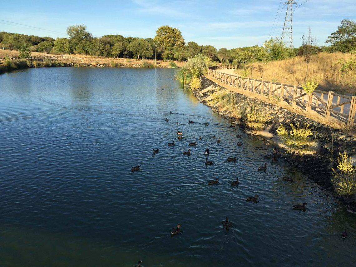 Lago con patos