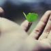 Arte de planta sobre una mano